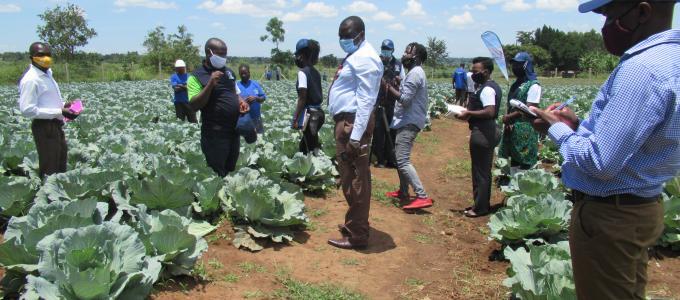 Adonia Irrigation scheme
